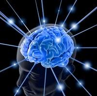 Potensi Otak menurut Islam